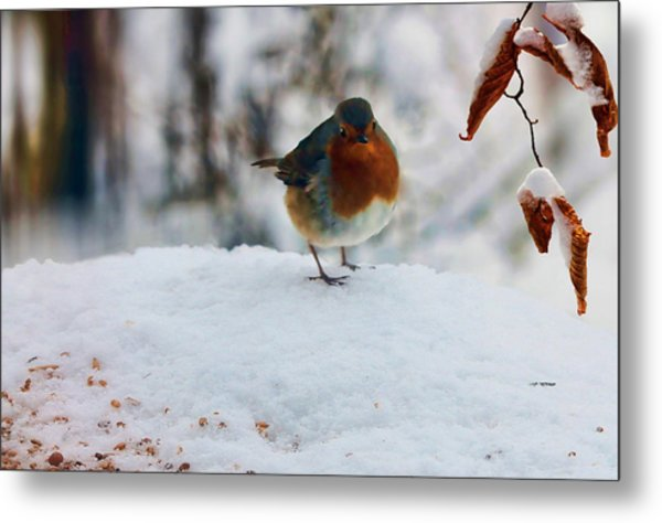 Metal Print featuring the photograph Robin Redbreast by Valerie Anne Kelly
