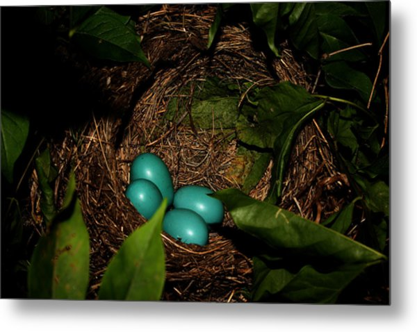Robins Nest Metal Print