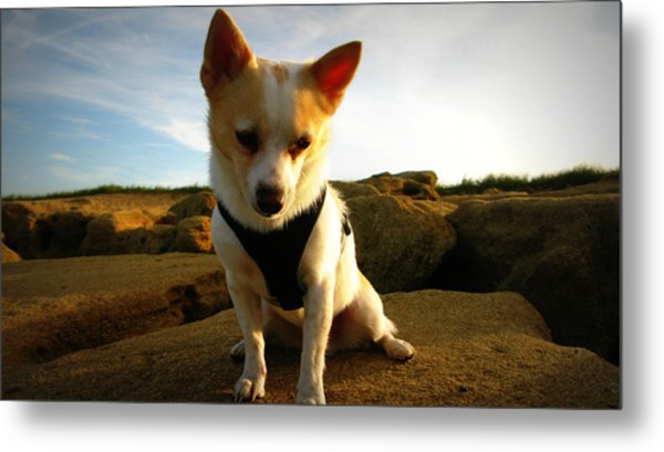 Rock Climbing Rocko Metal Print by Mandy Shupp