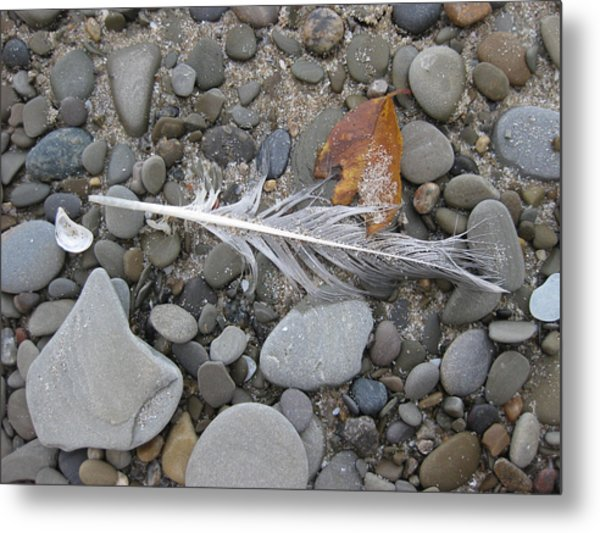 Rock Feather Shell Leaf Metal Print