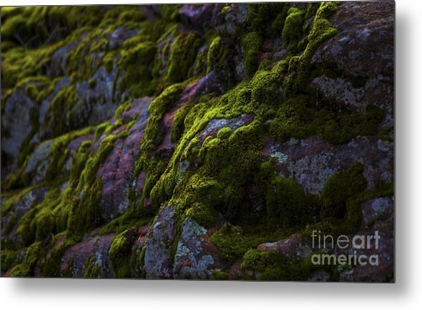 Rock With Green  Metal Print by Barbara Schultheis