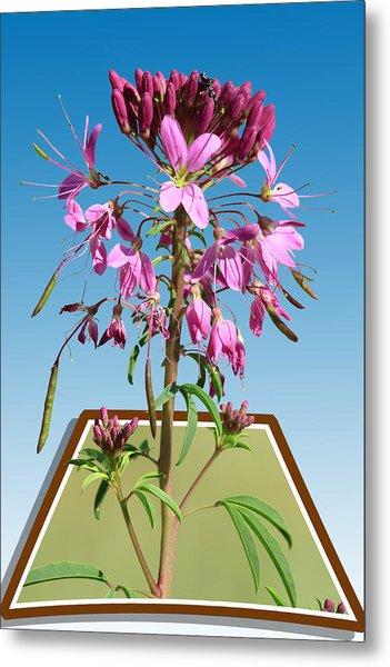 Rocky Mountain Bee Plant Metal Print