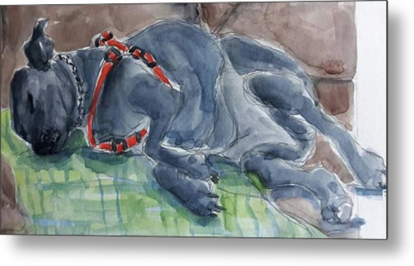 Rocky Napping Metal Print by Janet Butler