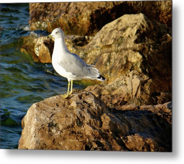 Rocky Waters Metal Print