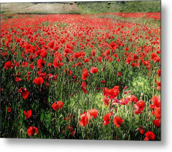 Rolling Fields With Poppies Metal Print
