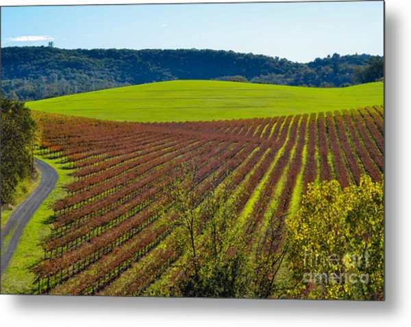 Rolling Hills And Vineyards Metal Print
