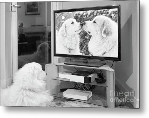 Romantic Dogs Metal Print