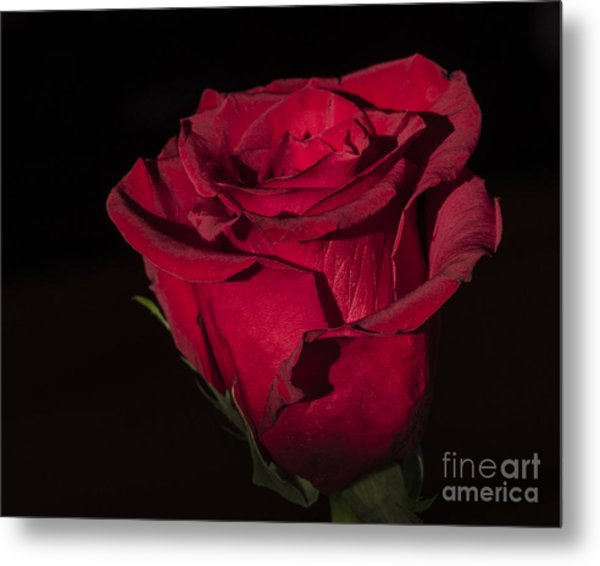 Romantic Rose Metal Print