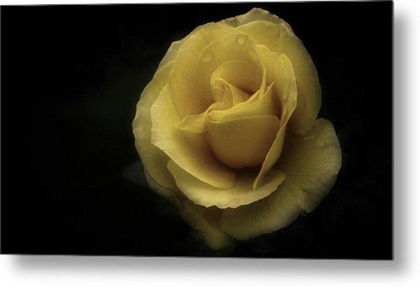 Romantic Yellow Rose 2016 Metal Print