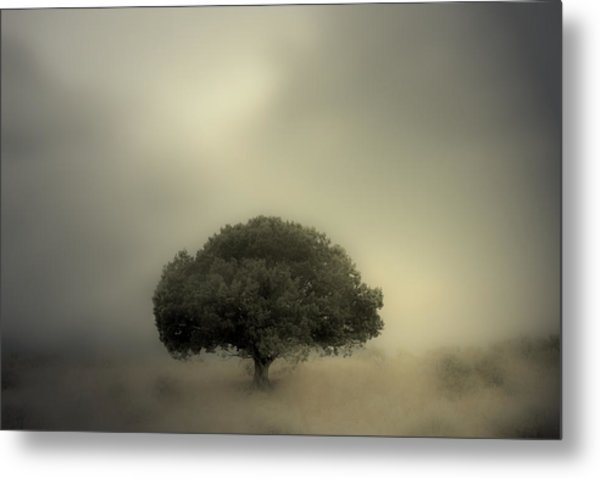 Room To Grow Metal Print