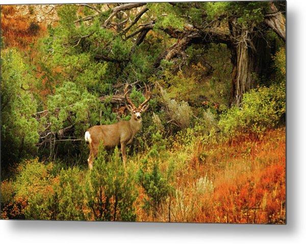 Roosevelt Deer Metal Print