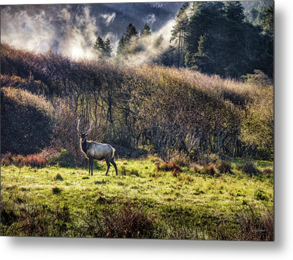 Roosevelt Elk Metal Print