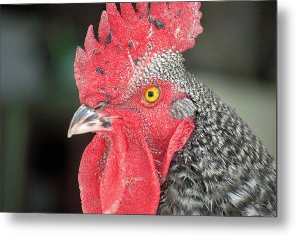 Rooster Named Brute Metal Print