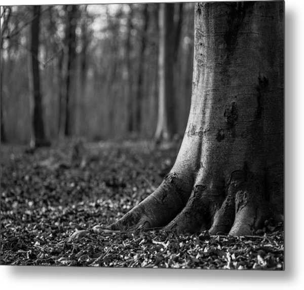 Metal Print featuring the photograph Rooted by Will Gudgeon