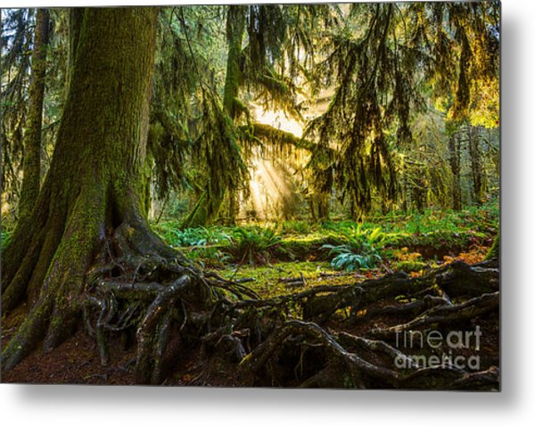 Roots And Light Metal Print