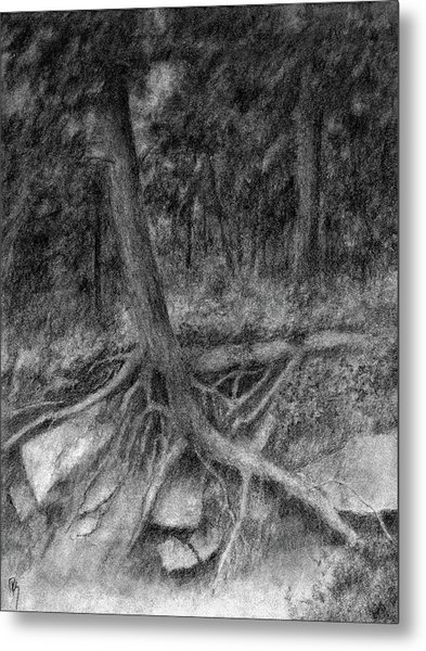 Roots II Metal Print