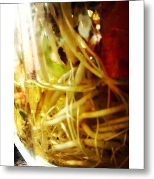Roots #roots #plants #vegetables #green Metal Print