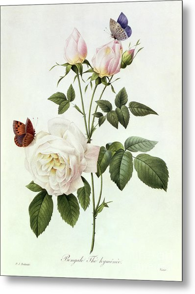 Rosa Bengale The Hymenes Metal Print