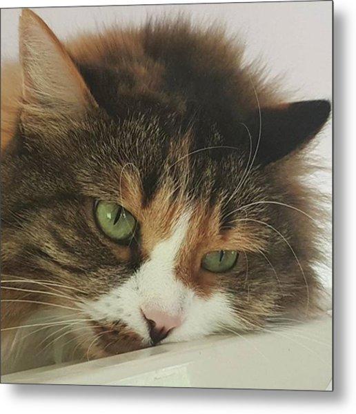 rosalie #cats #cat #pets #photo Metal Print