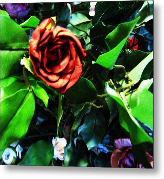 Rose Metal Print by HollyWood Creation By linda zanini