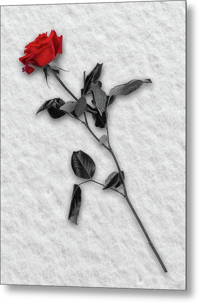 Rose In Snow Metal Print