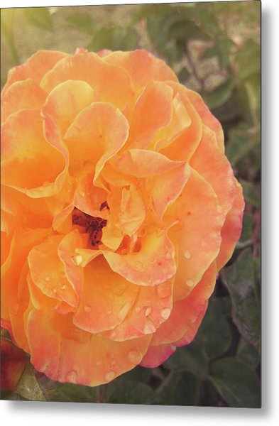 Rose Of Seville Metal Print by JAMART Photography
