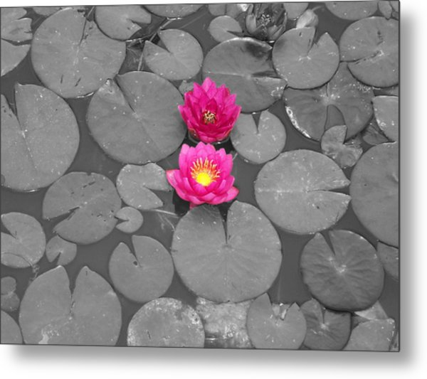Rose Of The Water Metal Print