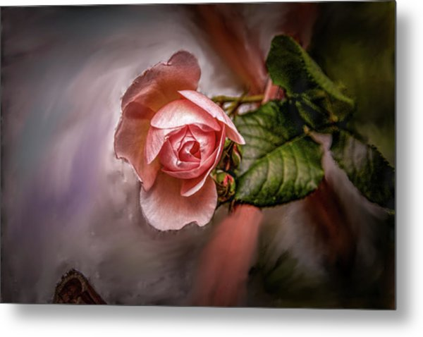 Rose On Paint #g5 Metal Print