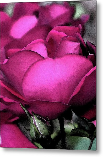 Rose Petals Metal Print by Michele Caporaso