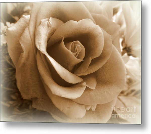 Rose Vignette Metal Print