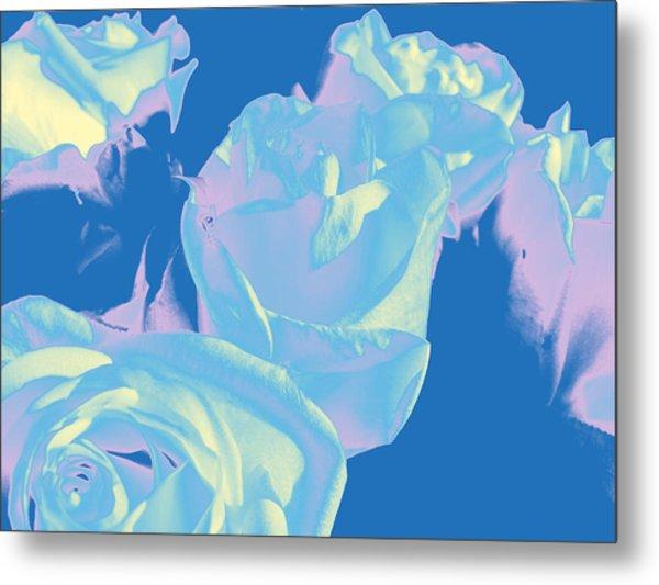 Roses #3 Metal Print