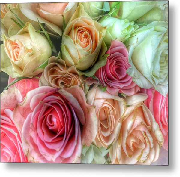Metal Print featuring the photograph Roses- Pink And Cream by Marianna Mills