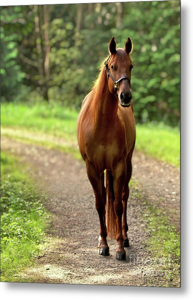 Rosey On The Road Metal Print