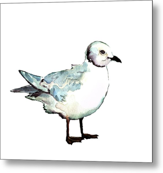 Ross's Gull Metal Print