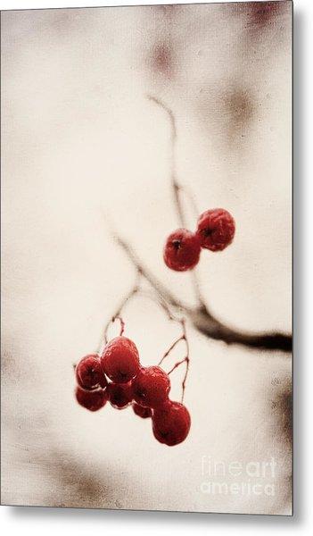 Rote Beeren - Red Berries Metal Print