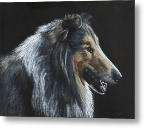 Rough Collie Metal Print