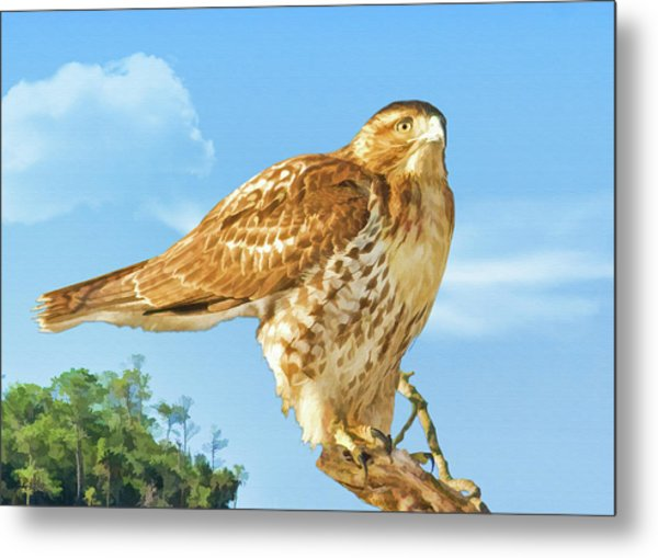 Rough-legged Perch Metal Print by Delores Knowles
