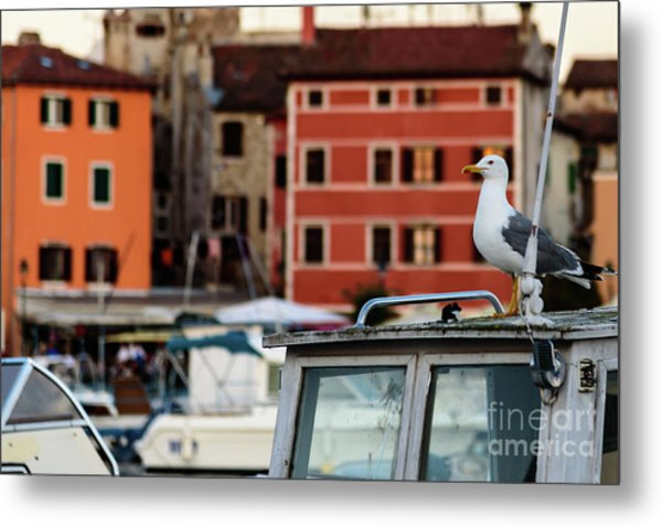 Rovinj Harbor Seagull - Rovinj, Istria, Croatia Metal Print