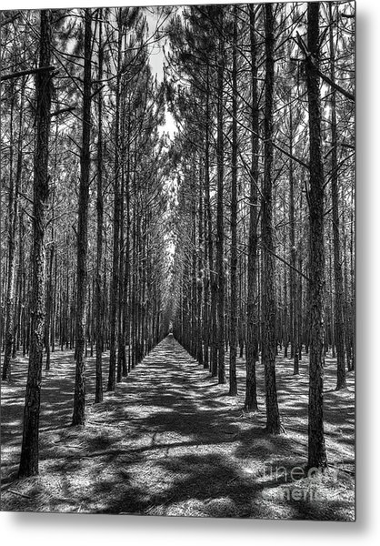 Rows Of Pines Vertical Metal Print