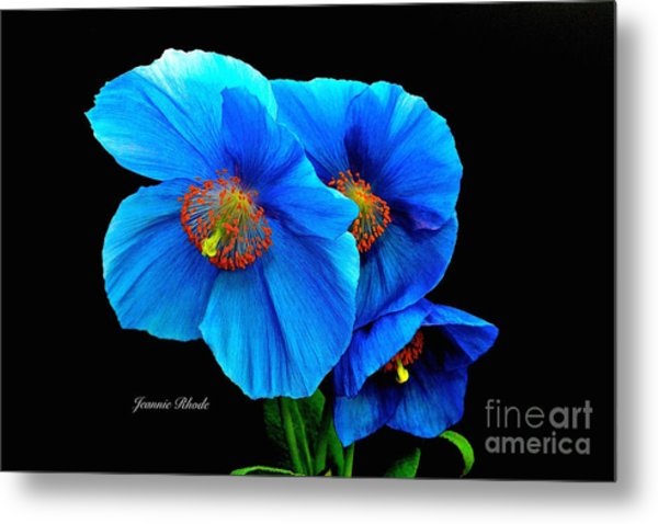 Royal Blue Poppies Metal Print