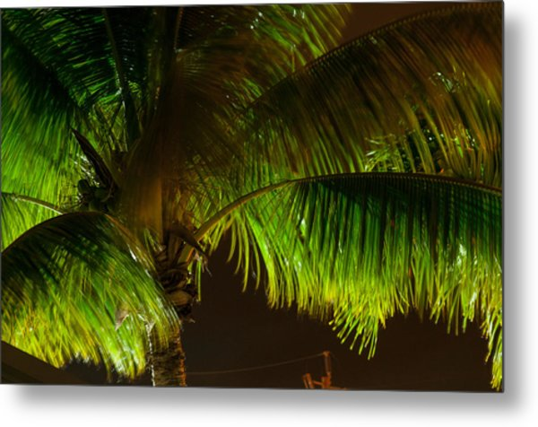 Royal Palm Night Out Metal Print