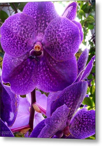 Royal Purple Orchids Metal Print