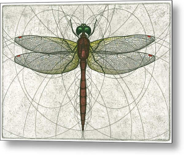 Ruby Meadowhawk Dragonfly Metal Print
