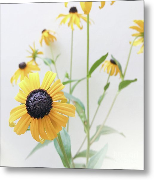 Metal Print featuring the photograph Rudbeckia 1 by Cindy Garber Iverson