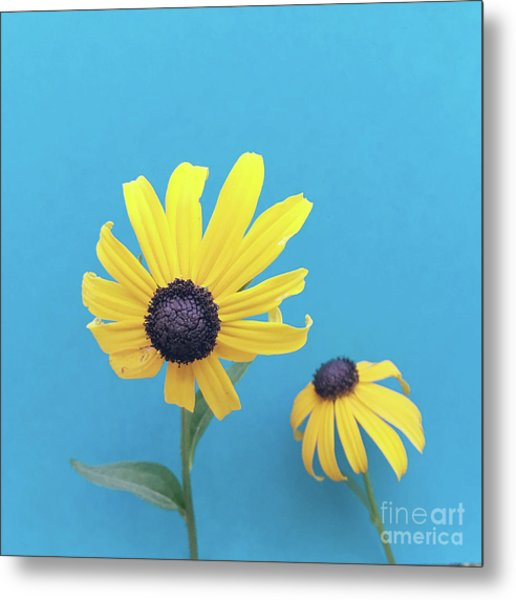 Metal Print featuring the photograph Rudbeckia 2 by Cindy Garber Iverson