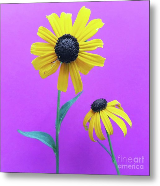Metal Print featuring the photograph Rudbeckia 3 by Cindy Garber Iverson