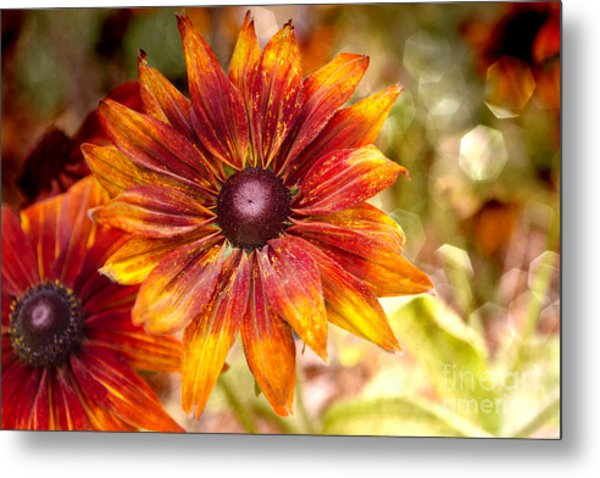 Rudbeckias With Sparkly Bokeh Metal Print