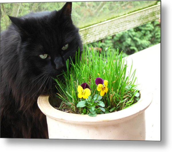 Rumbles Eating Grass Metal Print