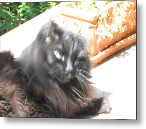 Rumbles Shakes Her Head Metal Print