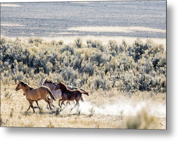 Running Mustangs, No. 2 Metal Print